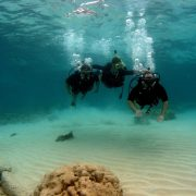 discover scuba diving amed bali