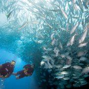 PADI Bali Amed Open Water Divers