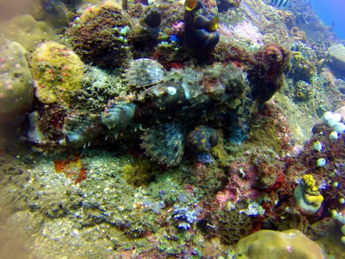 Tulamben Diving with Ecodive Bali - US Liberty Ship Wreck - Bearded scorpionfish
