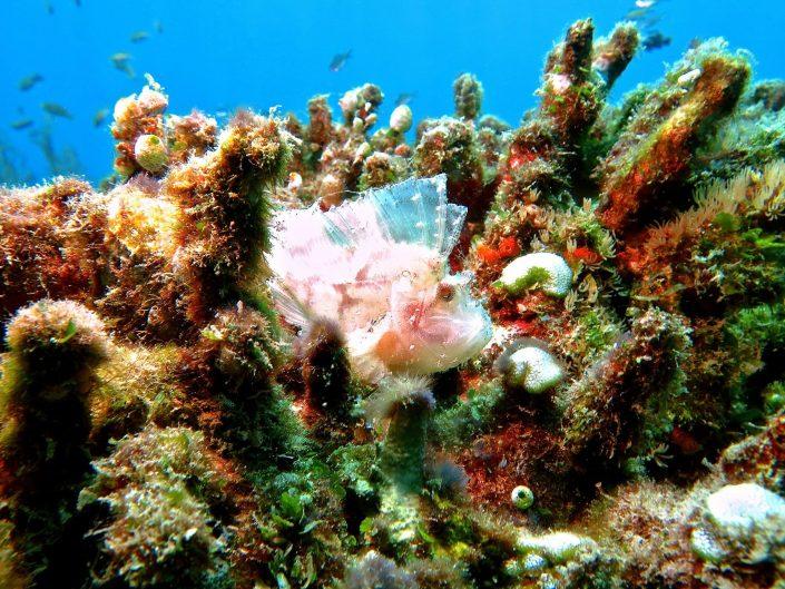 ecodive-bali-diving- poisson feuille du jour